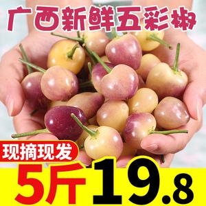 现摘广西七彩椒5斤五彩椒新鲜辣椒