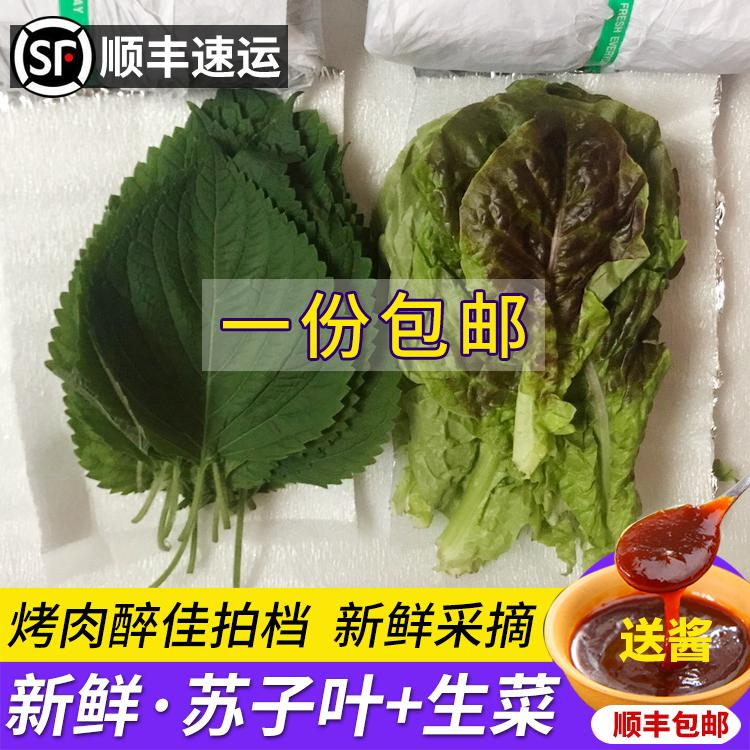 新鲜苏子叶新鲜烤肉叶绿紫苏叶鲜生菜叶食用蔬菜包肉包饭60片包邮