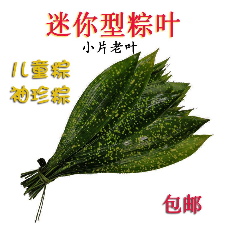 四川野生粽子叶迷你袖珍小片儿童粽叶现采割新鲜叶非竹叶箬叶免邮