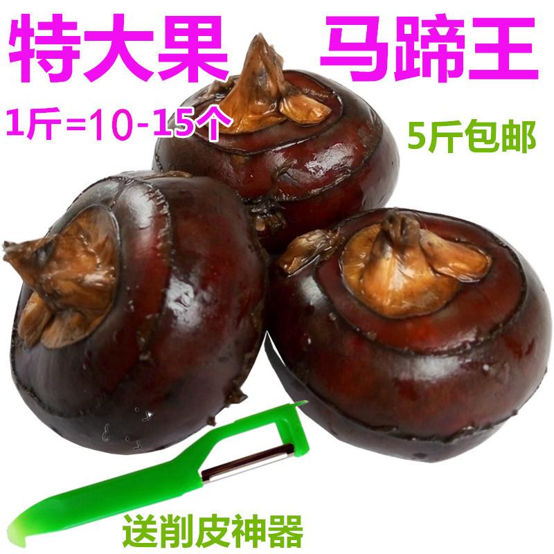 广西特产荔浦特大马蹄王地栗乌芋农家新鲜有机水果大号荸荠5斤装