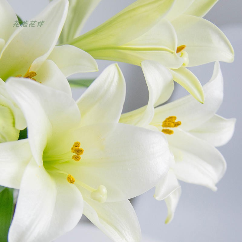 Perfume lily, Asian lily, double lily, Kunming base, straight hair home furnishing flower shop, flower arrangement.
