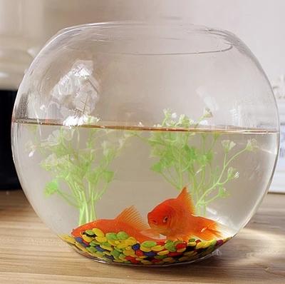 金鱼缸水培绿植物彩石装饰花盆一体玻璃造景客厅水养室内小型水生11月02日最新优惠