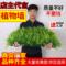 绿植墙仿真植物草皮墙装饰室内背景花墙面绿色壁挂塑料假草坪门头