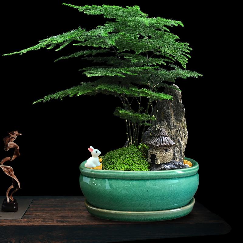 山石盆景发财树绿植文竹盆栽花卉办公室吸甲醛桌面小植物室内好养