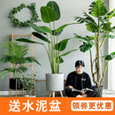 饰大型北欧假绿植盆栽摆件旅人蕉龟背竹散尾葵落地 七茉仿真植物装