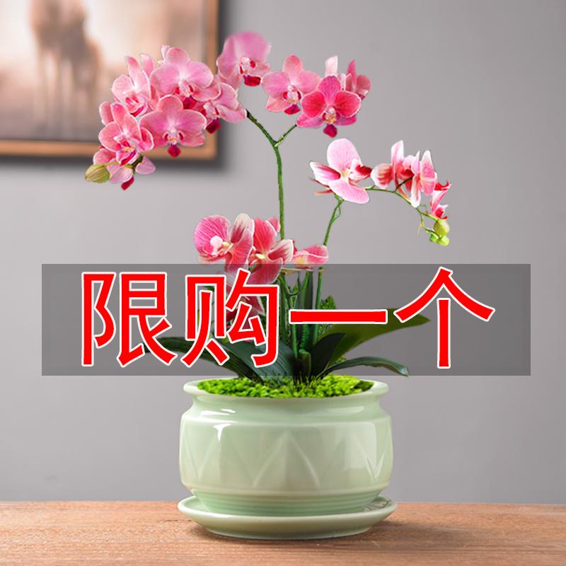 青瓷多肉花盆蝴蝶兰带托盘大号吊兰