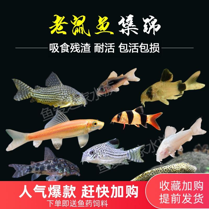 Рыбы Артикул 544445055032