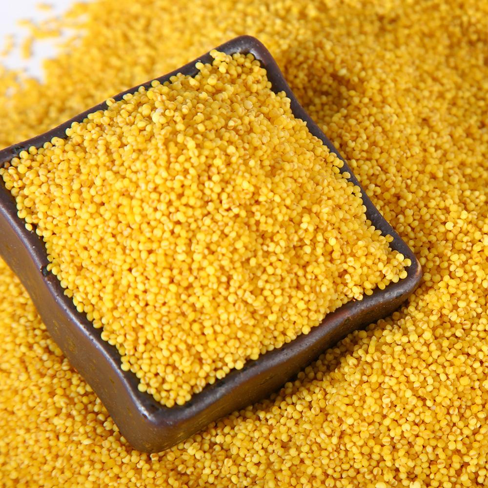 2016秋收新東北有機紅穀黃小米2750g(5.5斤)特產雜糧小米粥包郵
