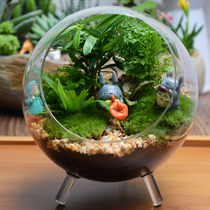Micro Landscape plant Ecological bottle Creative potted Moss Bonsai mini potted diy desk pendant potted plant