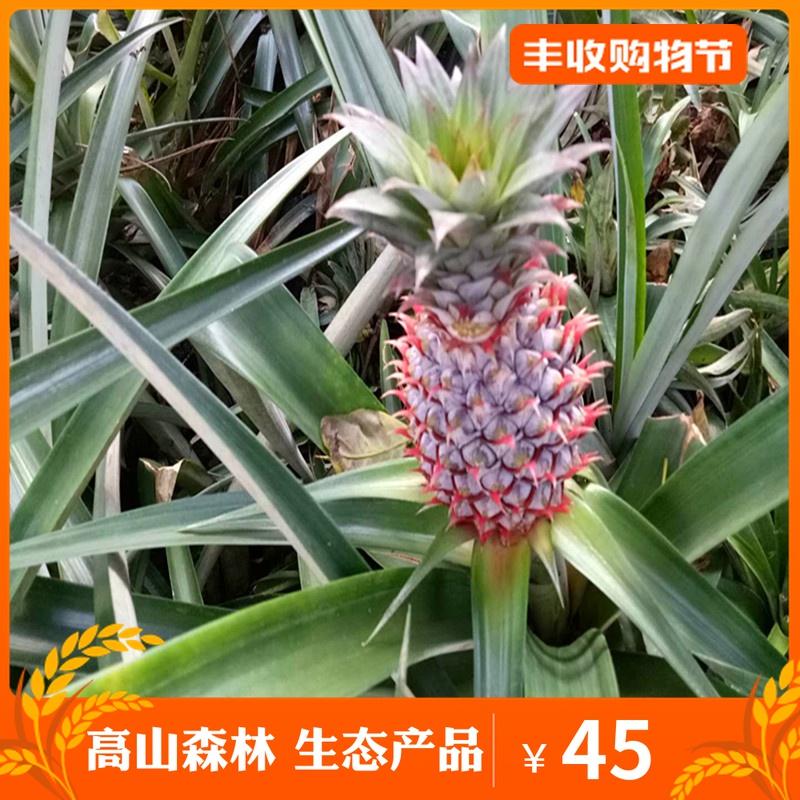 高山美物 菠萝 凤梨纯天然绿色新鲜无公害水果甜脆多汁带箱子5斤