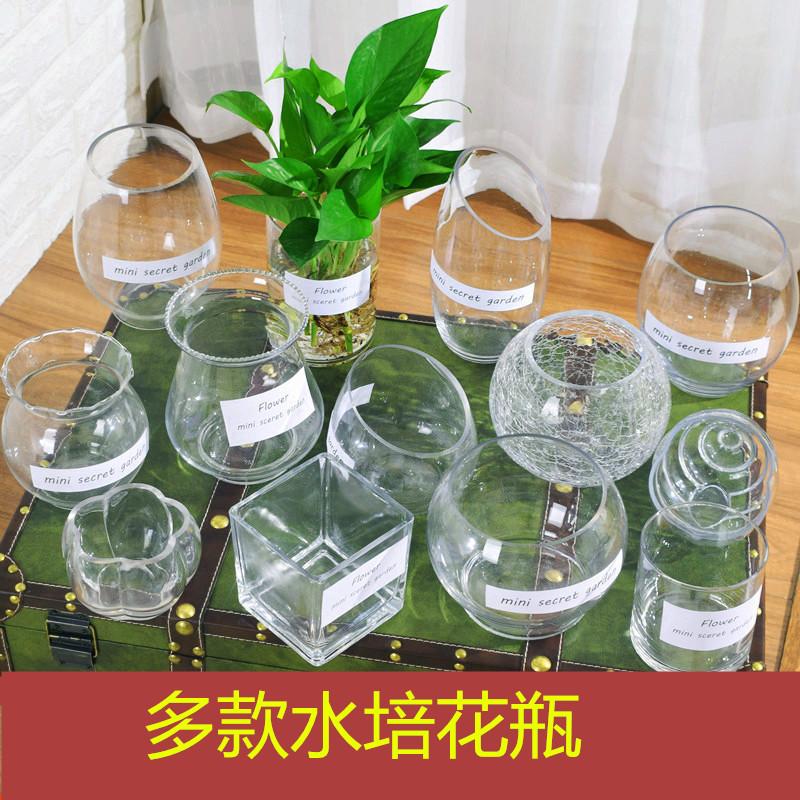 簡単な西洋式の透明なガラスの花瓶の水は緑の萝の鉢植えの金魚鉢の水を植えて植物の客間を養います。