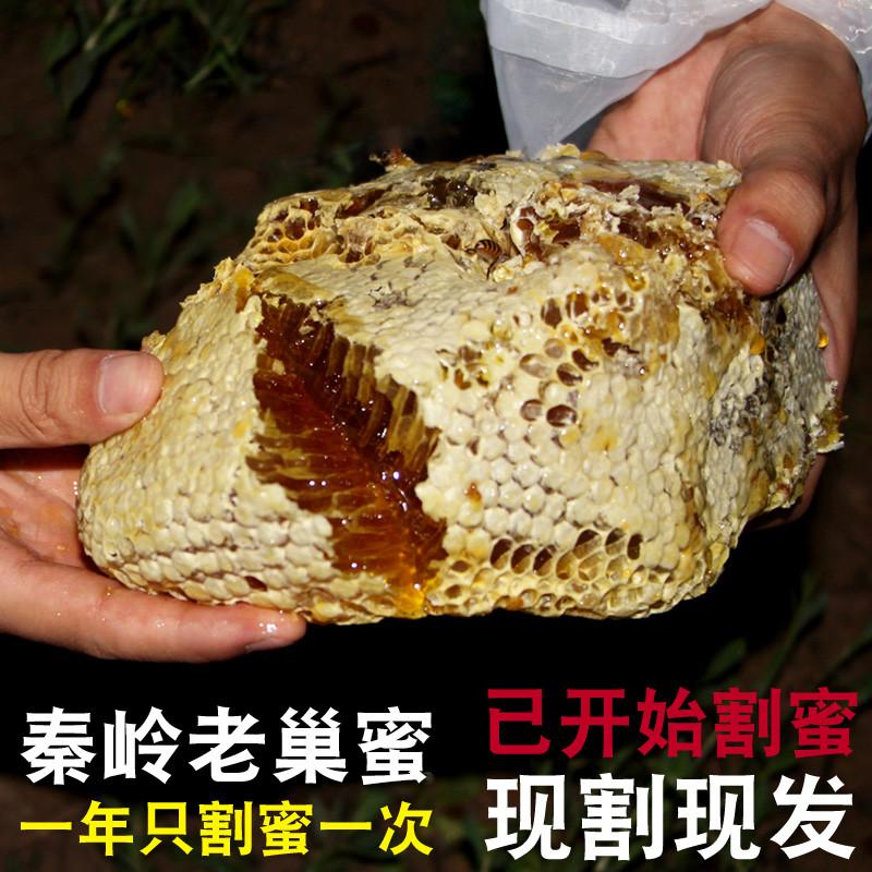 野生蜜源纯正老巢蜜秦岭土蜂蜜天然农家自产老蜂巢嚼着吃窝蜂巢蜜