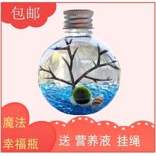 包邮幸福海藻球marimo球藻DIY水培微景观生态瓶创意桌面迷你植物