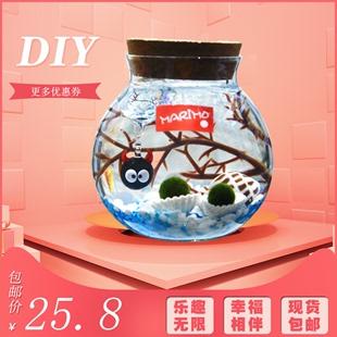 包邮marimo海藻球水培植物玻璃瓶
