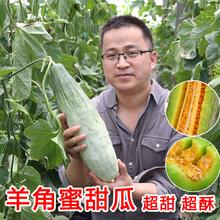 羊角蜜甜瓜种籽羊角酥甜瓜种子香瓜苗密正品春季四季水果特大种孑