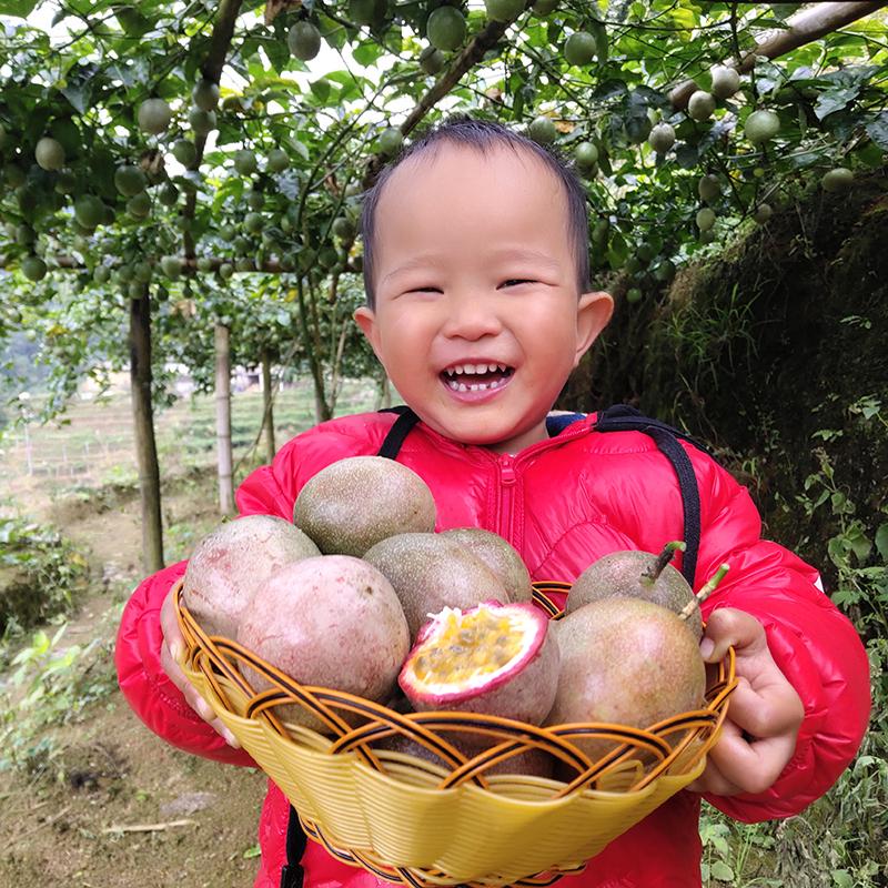 广西北流热带新鲜5斤装中果百香果