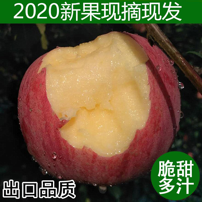 2020甘肃庆阳红富士孕妇吃的苹果现摘现发水果当季新鲜冰糖心10斤