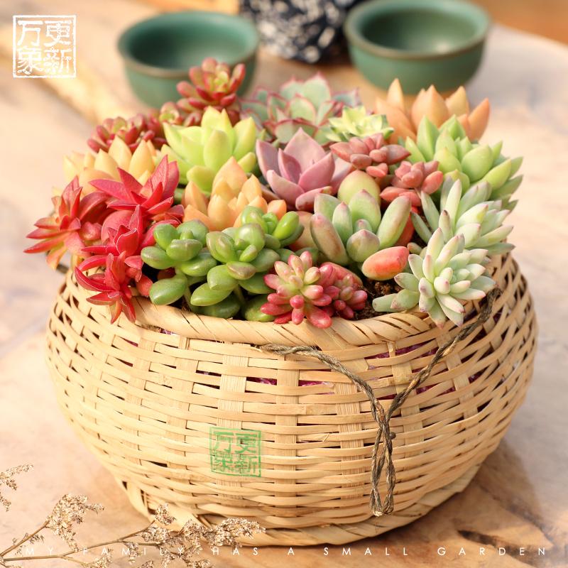 万象更新多肉植物组合盆栽新手多肉小盆景办公室内创意花卉植物