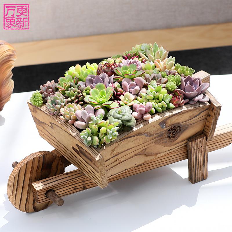 万象更新多肉植物盆栽新手套餐室内绿植花卉桃蛋肉肉植物