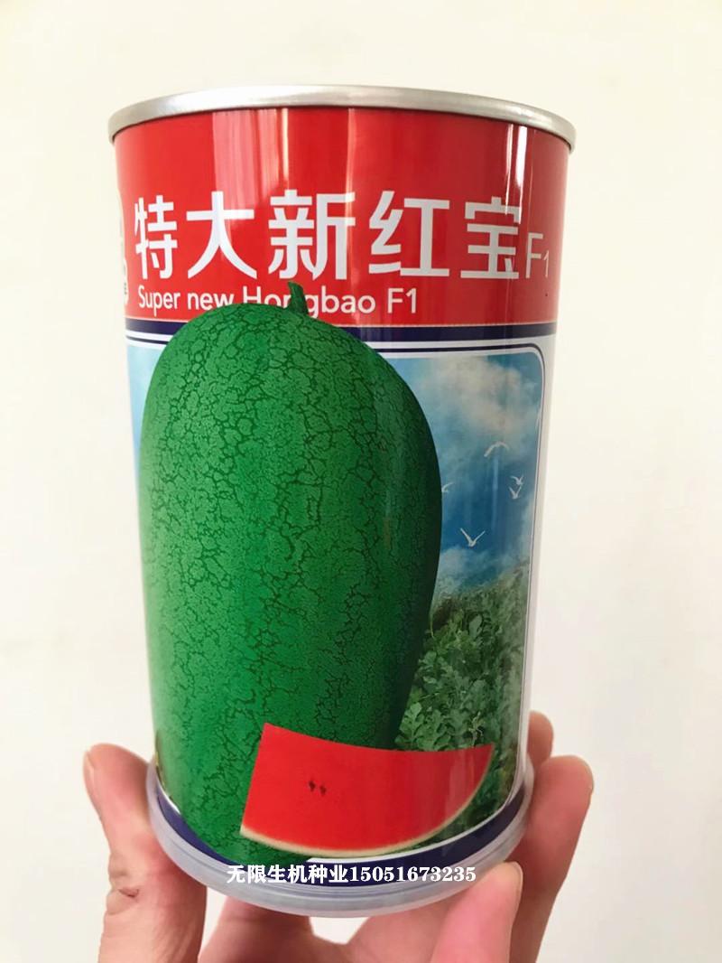 Big new Hongbao watermelon seed super sweet giant lazy big watermelon seed planting red flesh watermelon seed in four seasons