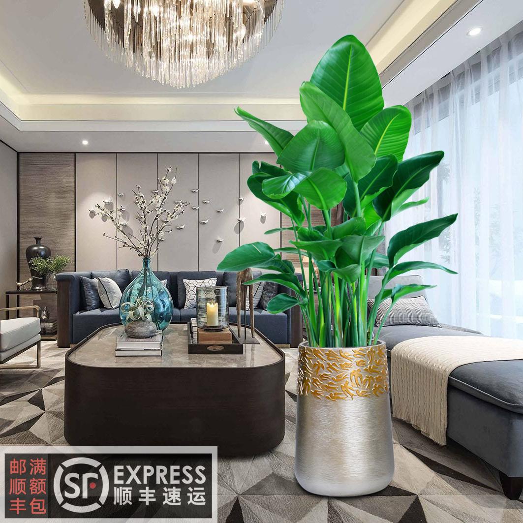 客厅大型植物盆栽天堂鸟鹤望兰室内真花办公室绿植花卉吸甲醛好养