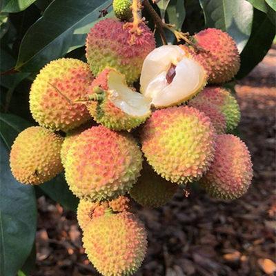 荔枝新鲜妃子笑三月红桂味挂绿孕妇水果5斤装当季现摘现发白糖罂