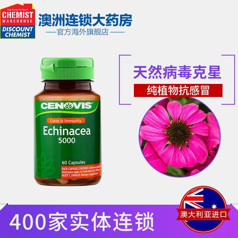 Cenovis фиолетовый шило хризантема капсула увеличение избежать мор сила 5000mg 60 зерна австралия импорт CW большой медицина дом