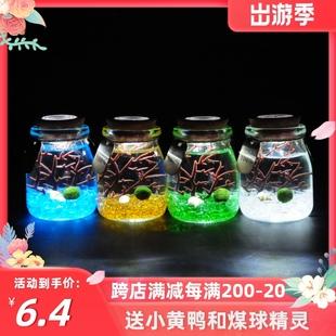 包邮海藻球玻璃生态瓶微景观带灯迷你鱼缸创意植物小盆栽生日礼物