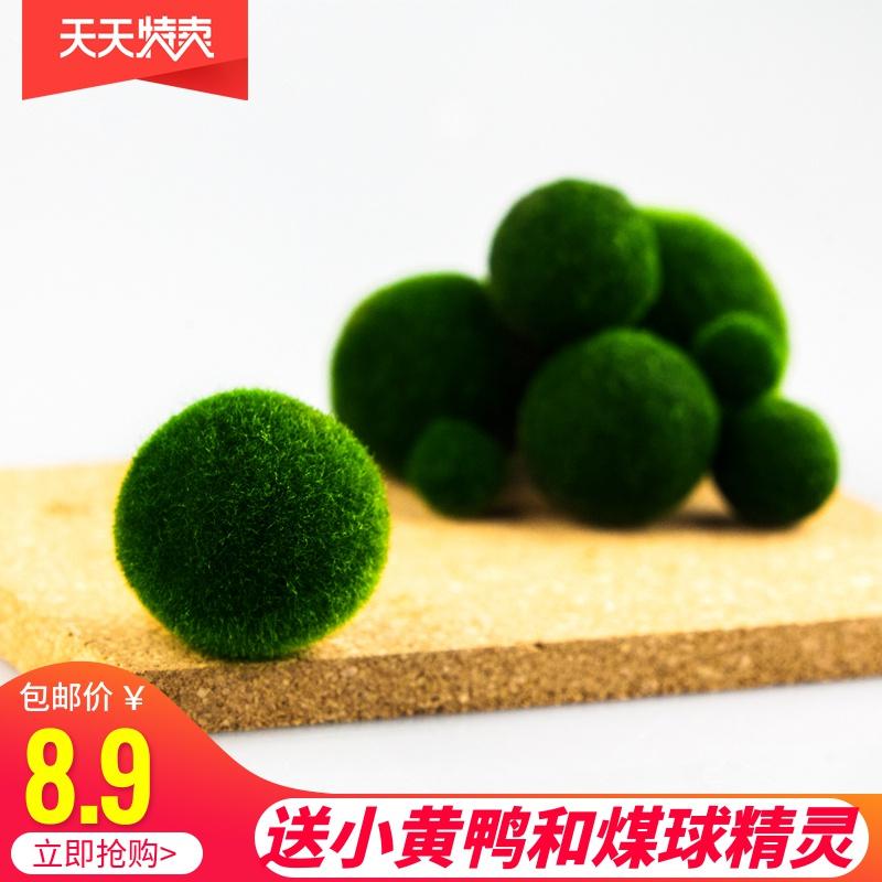 Горшки с растениями Артикул 523839095759