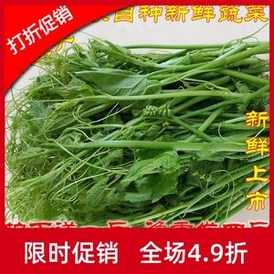 云南佛手瓜尖洋瓜净重4斤新鲜蔬菜
