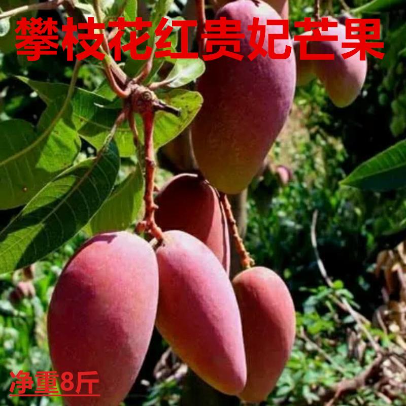 攀枝花红贵妃芒果 非凯特青芒金煌奥芒吉禄新鲜水果应季包邮