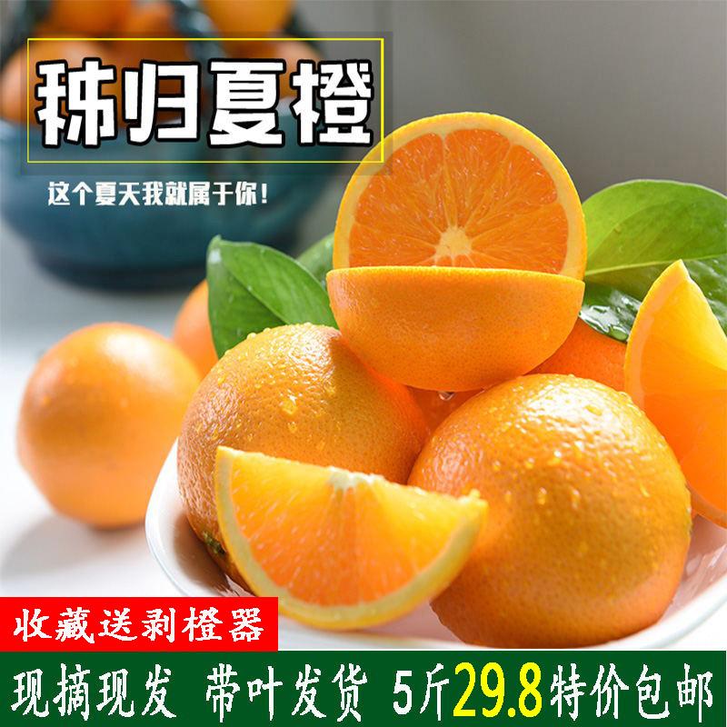 橙子当季新鲜水果秭归夏橙5斤包邮现摘现发拍2份发10斤非赣南伦晚