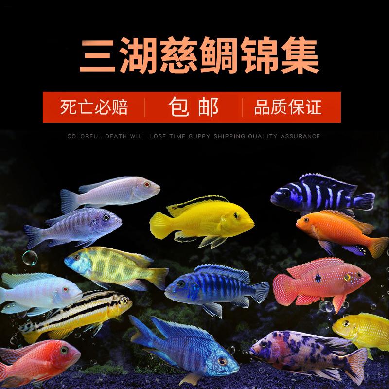 Рыбы Артикул 572657517830