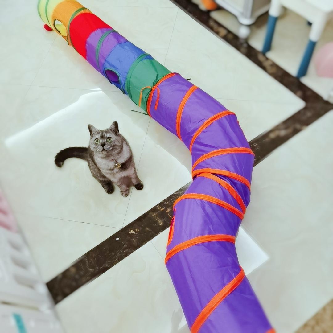 滚地龙隧道猫窝钻洞通道折叠玩具