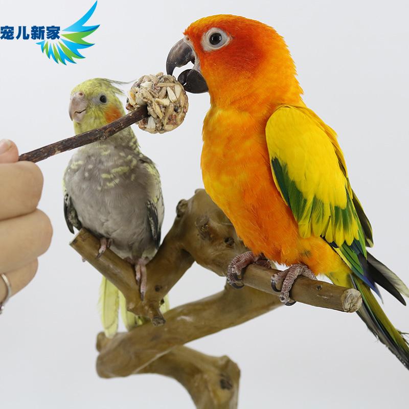 宠儿新家 粮鹦鹉零食棒棒糖 鸟奖励食物 训练用鸟粮-鹦鹉饲料(宠儿新家旗舰店仅售5元)