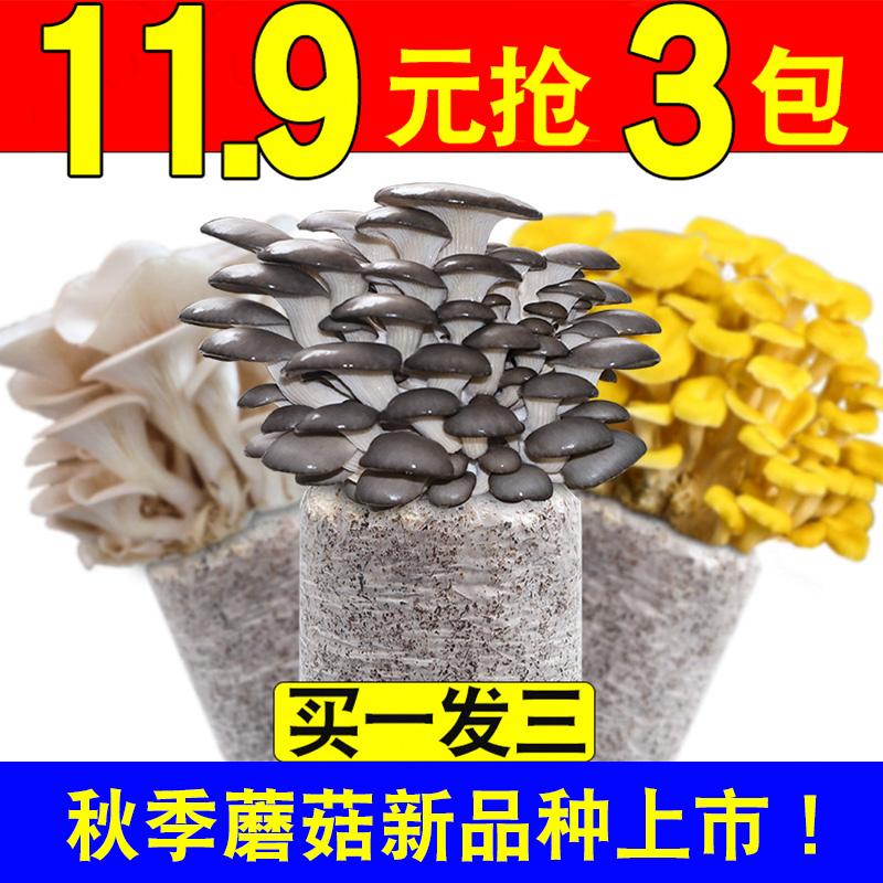 蘑菇菌包菌种种植包平菇菌棒木耳菌种菇种家庭室内香菇养种食用菌