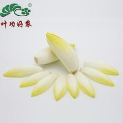 新鲜蔬菜 软化菊苣 白菊苣 金玉兰菜 西餐沙拉菜 芽叶菊苣 500g