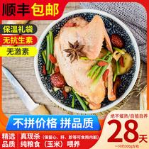 乳鸽生鲜冷冻活体现杀散养农家小土鸽子肉新鲜食材肉类营养月子汤