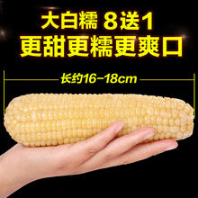 8 send 1 dew fresh sweet glutinous corn sticky glutinous rice stick vacuum packed non-genetically modified sticky picking rice