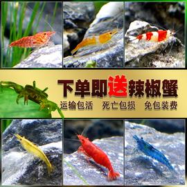 观赏虾活体宠物草缸黑壳水晶虾樱花极火米虾大和除藻工具虾苗淡水