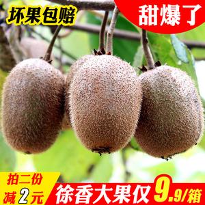 正宗江山徐香猕猴桃新鲜2.5斤装包邮泥奇异果过节送礼两份五斤装