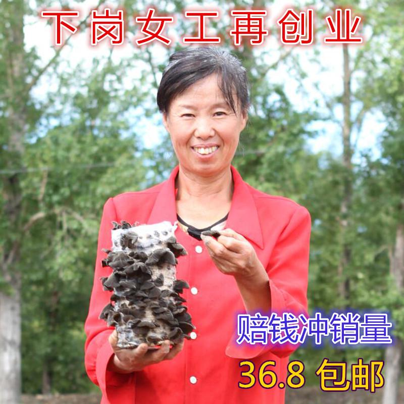 东北黑木耳正宗野生干货黑龙江牡丹江特产纯天然黑木耳包邮500g