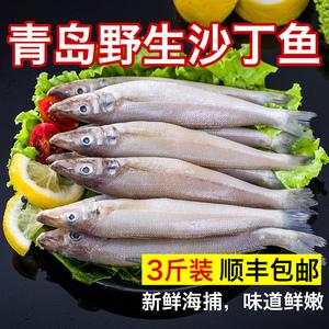 领1元券购买天香罗青岛野生沙丁鱼新鲜海捕深海鱼鲜活冷冻冰鲜海鲜特产1500g