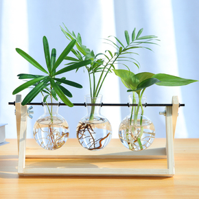 护眼水培植物玻璃瓶水养桌面摆件宿舍办公室室内绿植小型盆栽绿萝