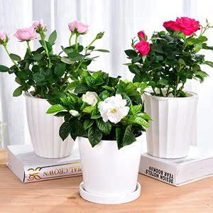 各种各样的花 盆栽花苞室内植物四季观赏植物花卉绿植苗开花不断