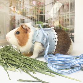 小兔牵引绳幼兔春夏服饰 龙猫貂小宠胸背带 荷兰猪外出牵引绳包邮图片
