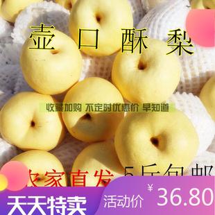 新鲜梨子 宜川壶口酥梨特级净5斤包邮水果陕西农家特产 砀山贡梨