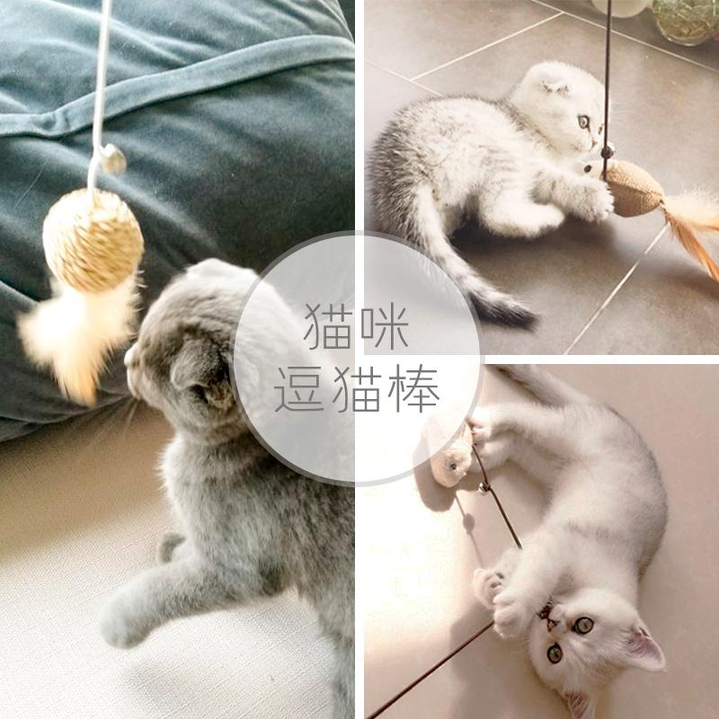 猫が猫の棒をからかうのは猫の神器の幼い猫をからかうのは歯を磨いて猫の棒を闘わせます。