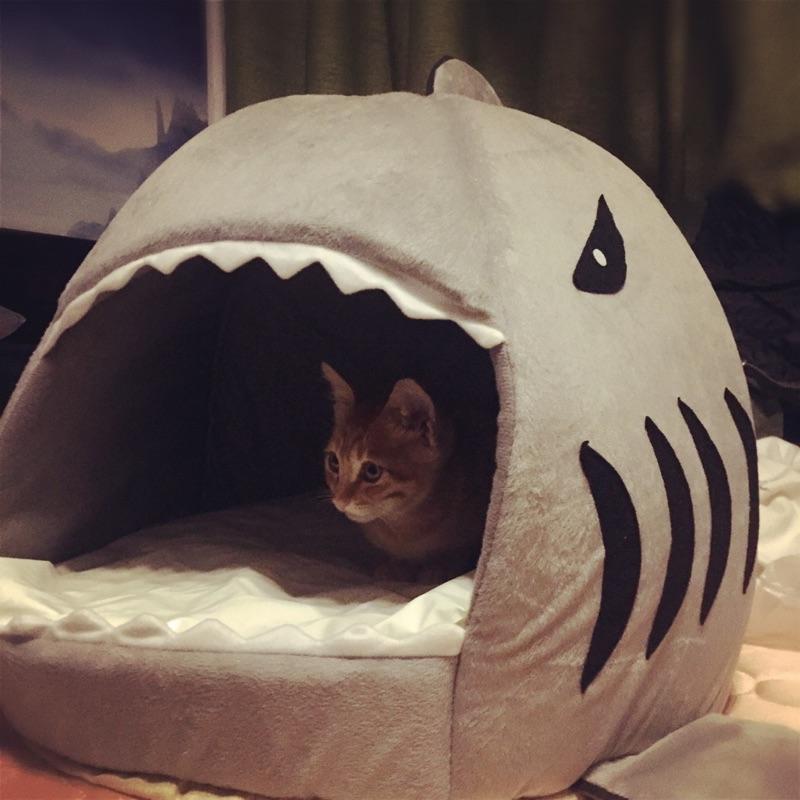 サメの猫の巣の閉鎖式の猫の家の別荘は猫のベッドの猫の家のペットの用品の四季通用する犬小屋を取り壊して洗うことができます。