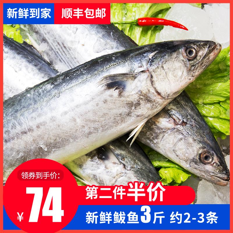鲅鱼新鲜马鲛鱼鲜活冷冻水产海鲜青岛本地蓝背大鲅鱼深海鱼
